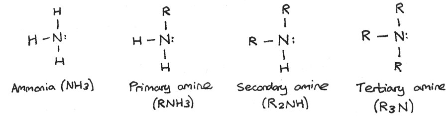 Amine groups.