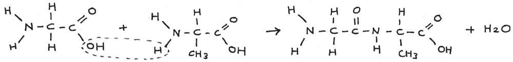 Condensation reaction